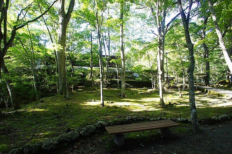 光と苔の共存が美しい、追分公園。休日はのんびり散歩したいスポット。