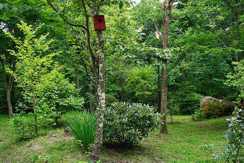 サクラ、イチョウ、モミジ、ウメ・・・様々な立ち木が、園庭に花を咲かせて彩を与えてくれます。