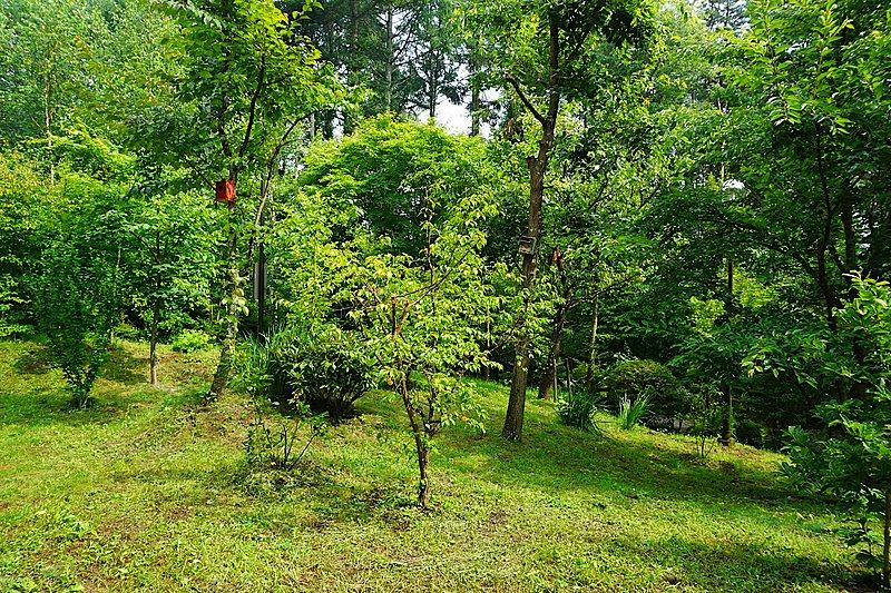 土地のアングレーションを生かし考案した、緑あふれるお庭。