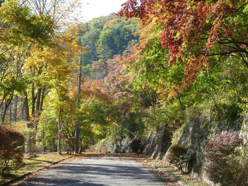 秋の紅葉の季節は、色とりどりの世界が楽しめる。