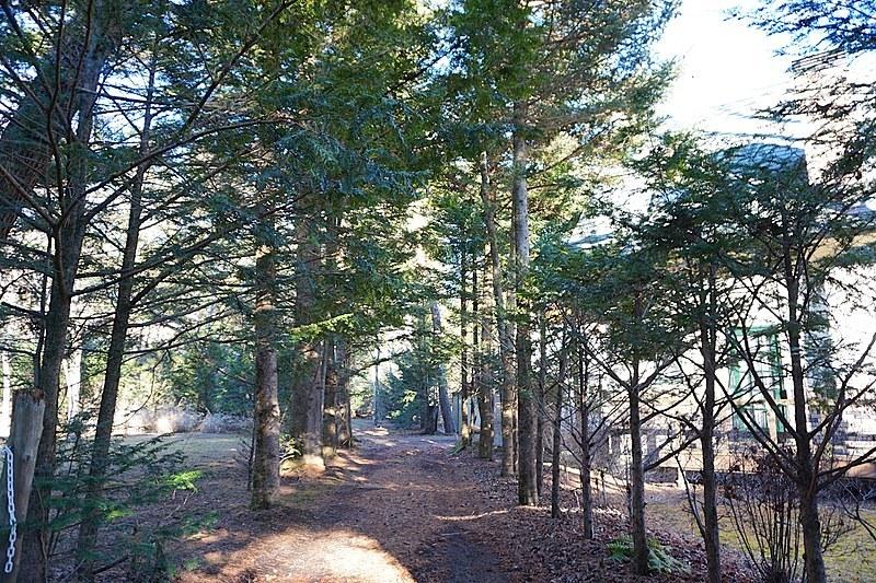 前面道路の様子。木立が並ぶ静かな一角。