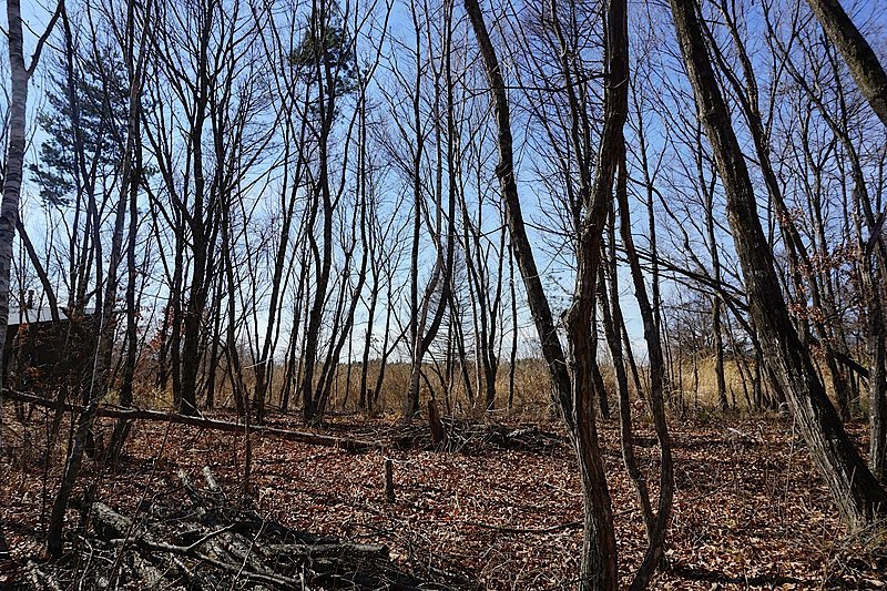 敷地の中央を撮影。緑の季節は眩しい木漏れ日が楽しめそうです。