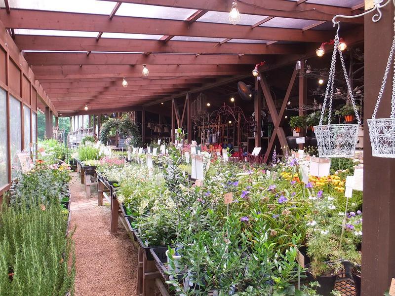 お花が大好き!な人に嬉しい大型花屋さん。ヴィーガンの方にも喜ばれるレストラン併設。