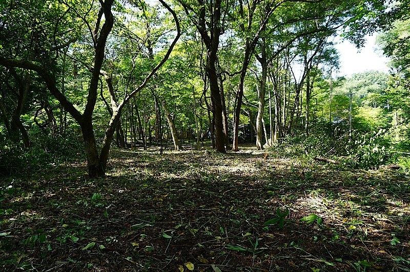 敷地内は平坦で、さまざまな軽井沢の樹木が楽しめます。