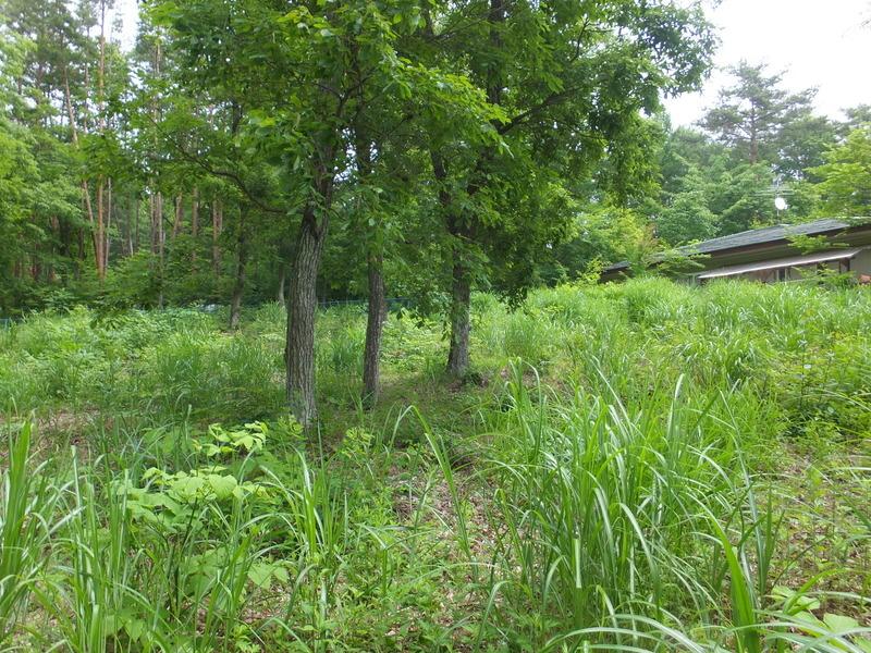 敷地内南側より北側に向かっての撮影。広い庭、ガーデニングや家庭菜園も楽しめそうです。
