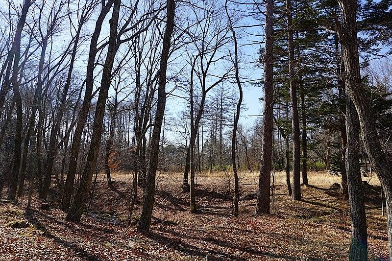 緑の季節は、生命力あふれる樹木の葉擦れの音や、鳥たちの共鳴も楽しめそう