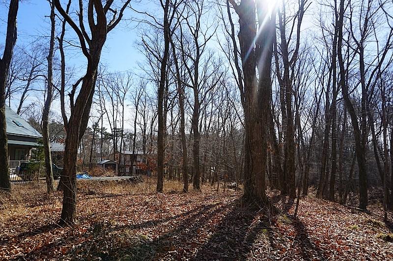 敷地中央より東側の隣地を撮影。こちらも適度な距離の立地です。緑の木漏れ日も気持ち良さそう。
