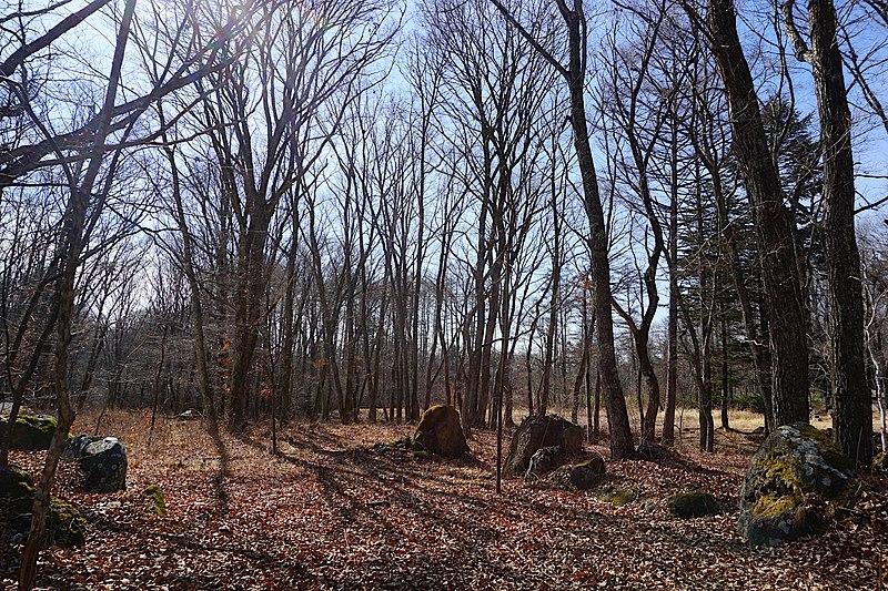 中央より南側を撮ってみました。のどかな樹木の土地はその先まで広がっていますよ。