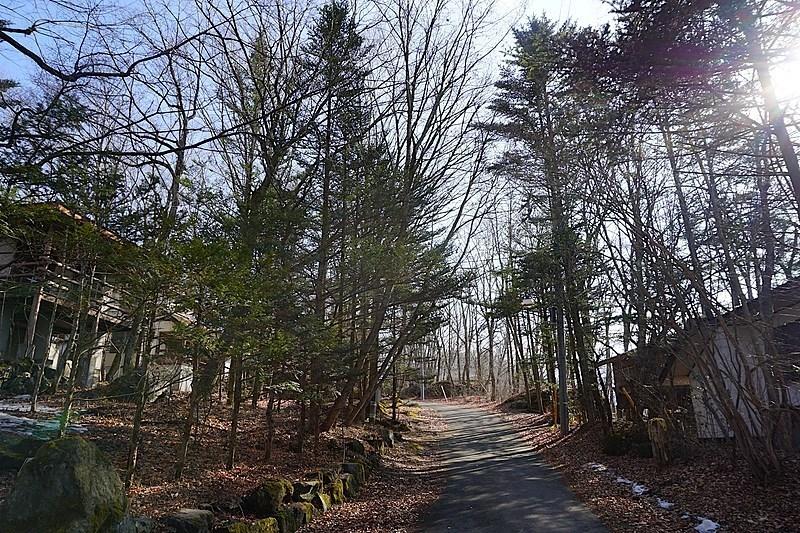 こちらも前面道路の様子。左側がご紹介の別荘です。木漏れ日がきれい。