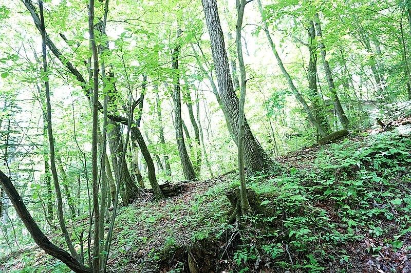建物内から西側の景色を撮影。森の中にいるような佇まいです。