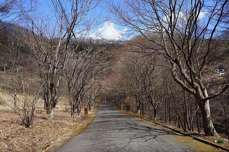 別荘地内の道は、車でもウォーキングでも気持ちよい佇まいです。