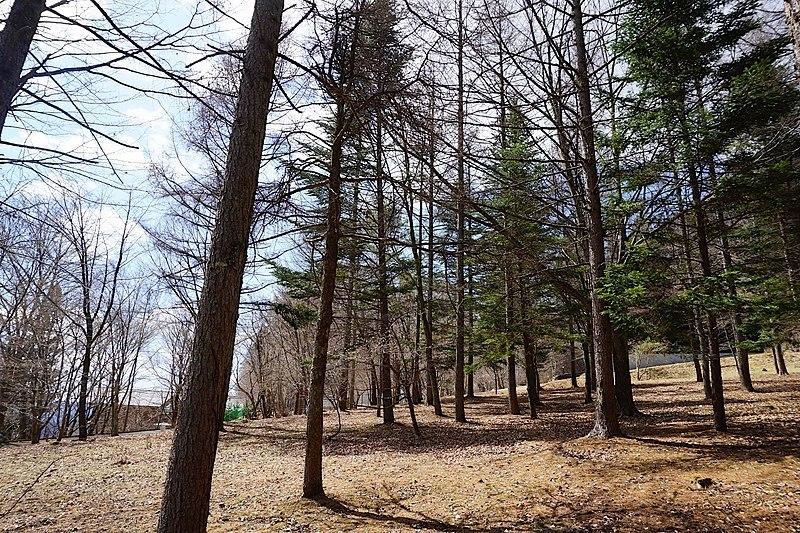 まっすぐに立ち伸びる木々に、背筋も伸びます。