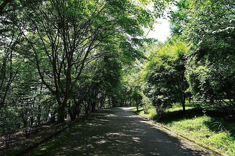 緑の季節も、溢れる生命力に圧倒されます。