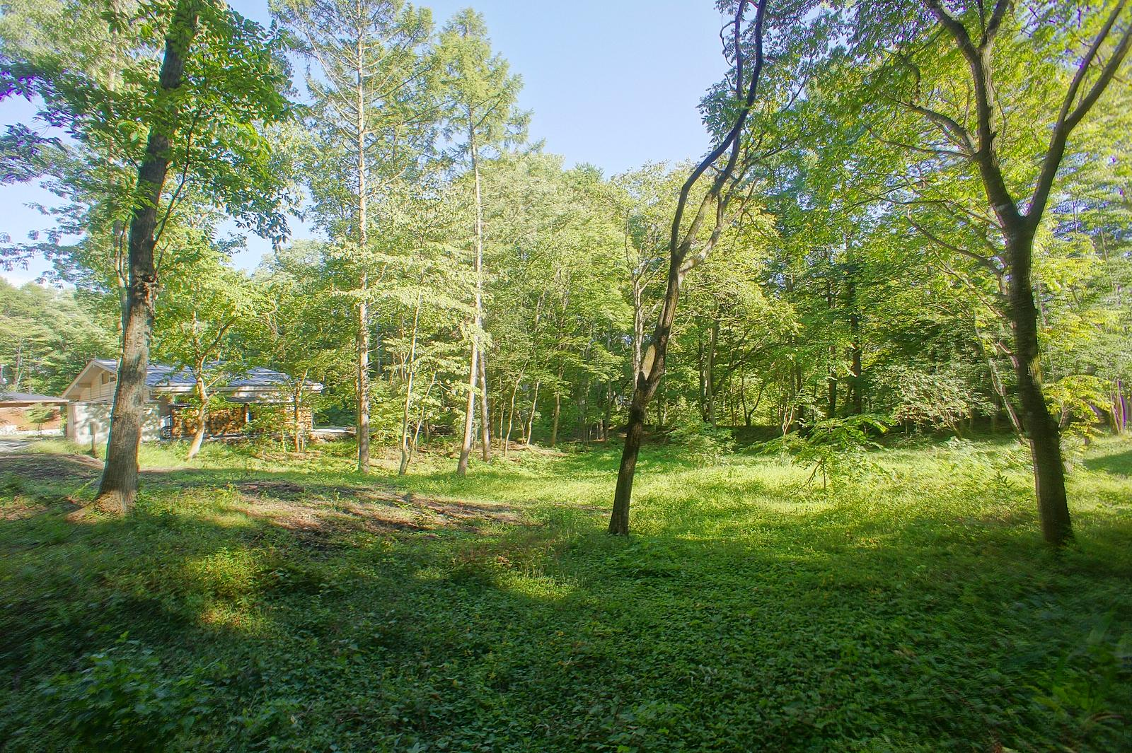 物件中央より東側前面道路を撮影。ミズナラなどの広葉樹に囲まれた緑いっぱいの土地。