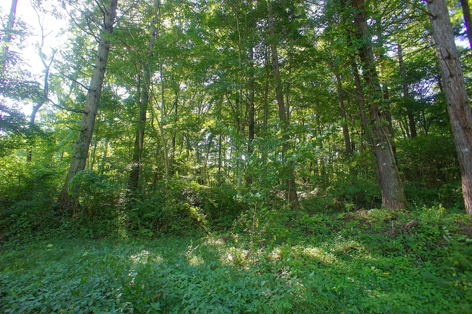 物件中央より西側を撮影。高い木が立ち並び、まるで森の中に佇んでいるよう。