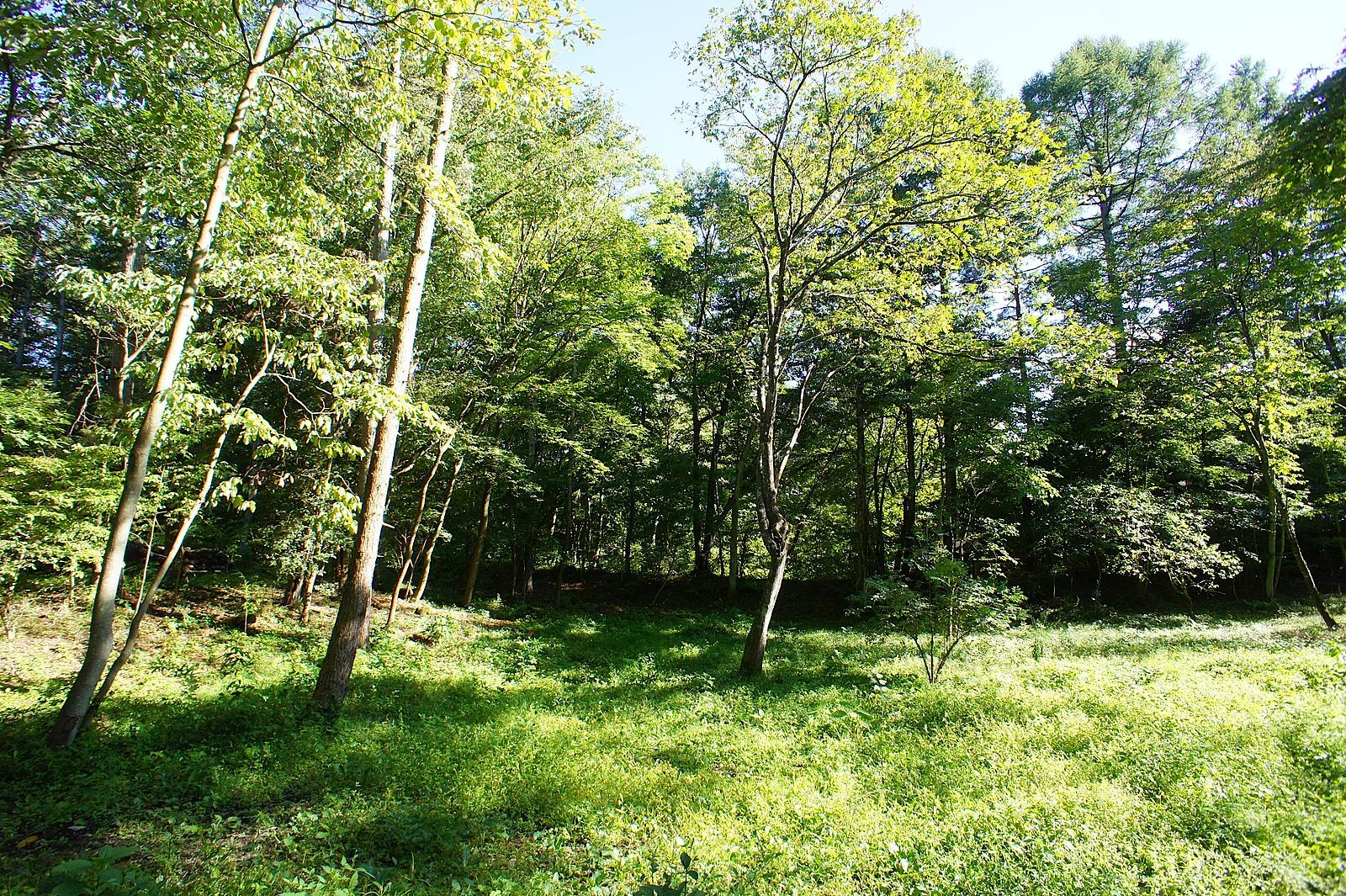 木陰が気持ちよさそうな場所がたくさん!小さな隠れ家をどこに建てましょうか。