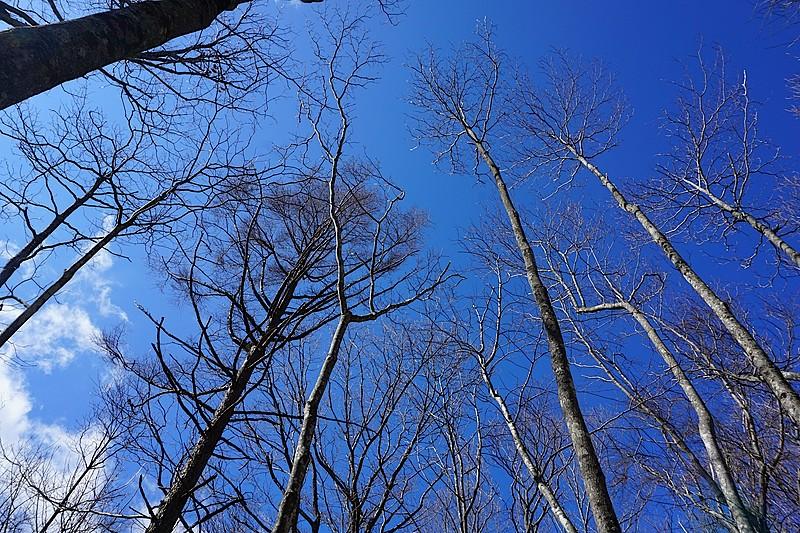空の青さ、陽の光の心地よさを存分に味わえる土地です。