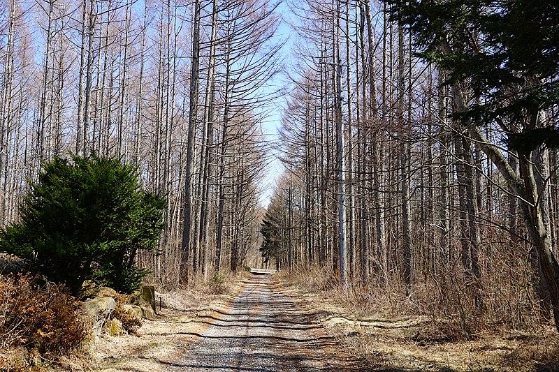 前面道路。美しい木立に包まれて。